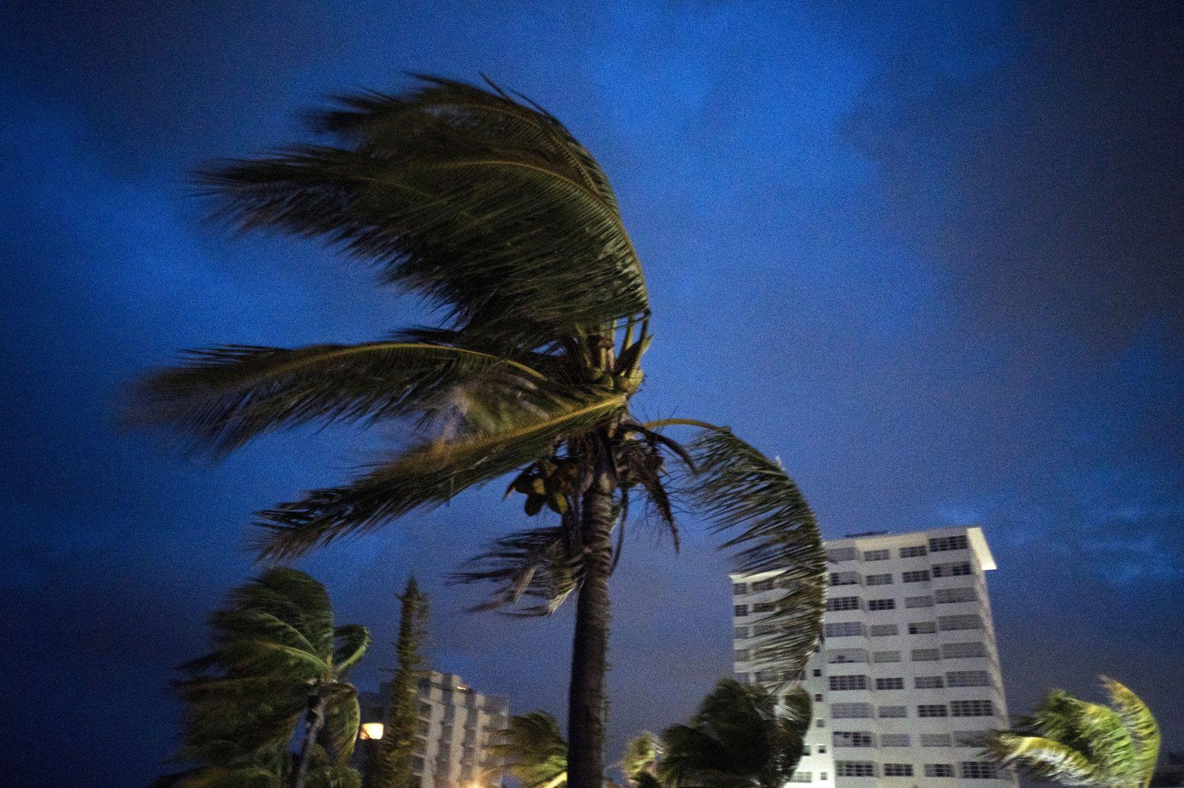 Fuertes vientos agitan las palmas de los cocoteros a la llegada del huracán Dorian a Freeport, Gran Bahama, Bahamas, el doming 1 de septiembre de 2019. (AP Foto/Ramón Espinosa)