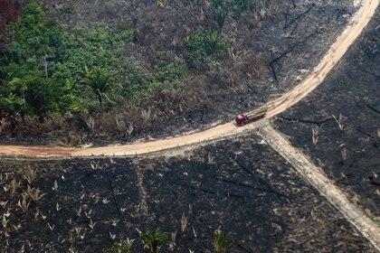 Áreas devastadas por los incendios en el estado Amazonas (AFP)