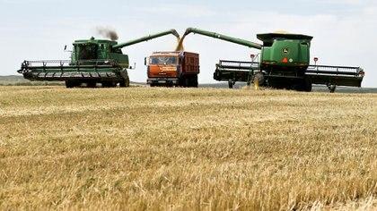Proyecciones de la Guía Estratégica para el Agro de la Bolsa de Comercio de Rosario advierten que la cosecha de trigo comienza a complicarse por las condiciones climáticas adversas