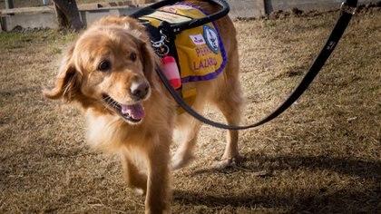 Canela es la primera perra en egresar del programa de perros guía