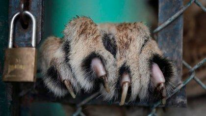 """""""Debo reconocer que la respuesta de la Justicia fue muy interesante porque nos tomó como querellantes, rechazó la medida cautelar del zoológico"""", aseguró el funcionario a Infobae."""