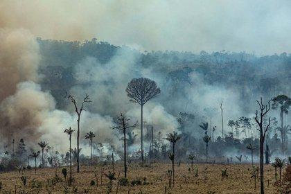 Desde que Bolsonaro asumió el cargo en enero los árboles del Amazonas han estado desapareciendo al ritmo de tres canchas de fútbol por minuto (AFP)