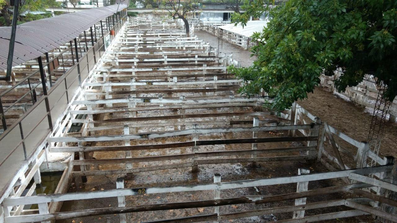 Hoy los corrales del Mercado de Hacienda de Liniers estuvieron vacíos. El cese de comercialización se sintió en dicha plaza