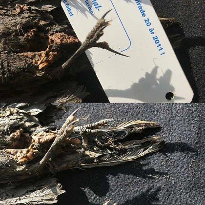 El pájaro fue encontrado en el noreste de Siberia en un sitio que también contenía otros especímenes congelados (Communications Biology)