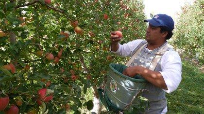 La cosecha de la fruta terminó en marzo