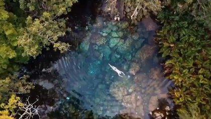 La ruta del Tren Maya pone en peligro uno de los pulmones más importantes de América: Calakmul. (Foto: Especial)