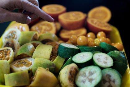 Según la FAO, Colombia está llamada a ser una de las despensas agrícolas del mundo