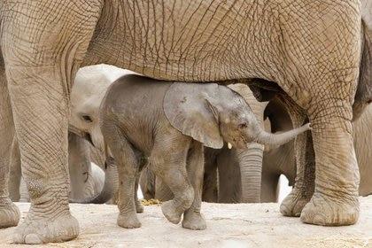 The New Big 5 abre las puertas a personas de todo el mundo a votar por sus cinco animales preferidos de la fotografía (REUTERS/Imelda Medina/Files)