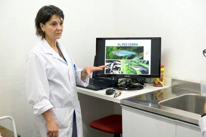 Nora Calcaterra espera entender al cáncer de piel con el estudio del pez cebra