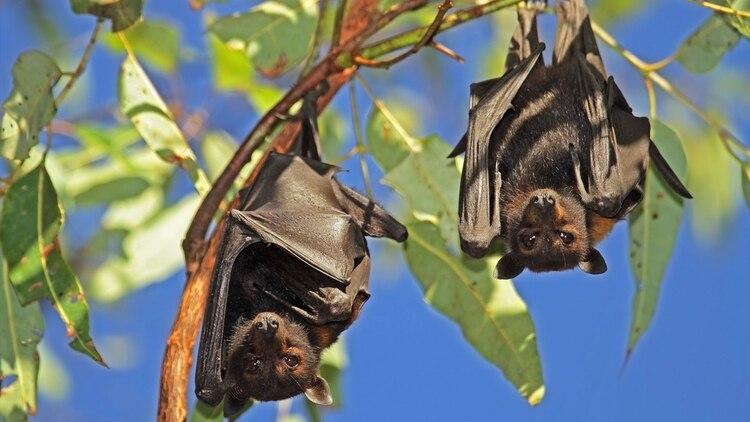 Baric vinculó los CoV de murciélagos y los de humanos y advirtió sobre