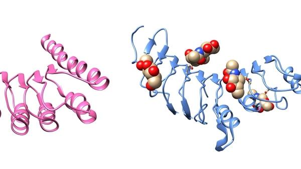 Proteínas con y sin azúcares que comparten un parentesco evolutivo