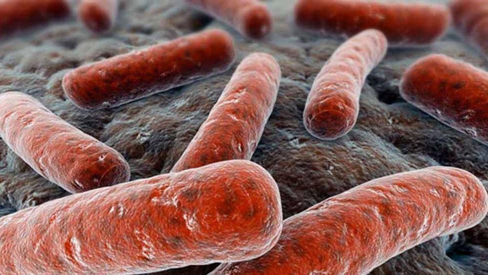 Los científicos que hicieron el trabajo en Nature Immunology consideran que el conocimiento sobre el desarrollo de plataformas basadas en vectores virales no replicativos para COVID-19 se podría trasladar al avance de inmunizaciones para otras enfermedades (SALUD CSIC)