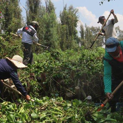 Alrededor de 160 funcionarios comenzaron a reforzar las acciones de limpieza como trabajos de extracción de residuos orgánicos e inorgánicos y la maleza acuática debido a la temporada de lluvias (Foto: Cuartoscuro)