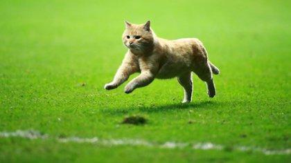 Un gato ingresó durante unos segundos a la cancha durante el partido (Foto: Twitter @miseleccionmx)