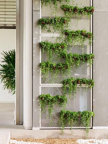 Una pared de cultivo o muro verde es una instalación vertical cubierta de plantas de diversas especies que son cultivadas en una estructura especial dando la apariencia de ser un jardín pero en vertical (Getty Images)