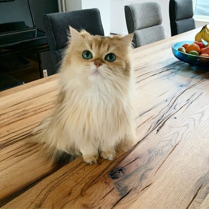 Smoothie the Cat tiene 2.2 millones de seguidores (Foto: Instagram @smoothietheca)
