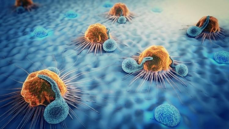 La estrategia de la inmunoterapia es utilizar, activar o suprimir nuestro sistema inmune como defensa de las células tumorales
