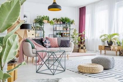 """""""Para el interior de sus hogares los argentinos prefieren plantas de follaje vistoso"""" Getty Images)"""