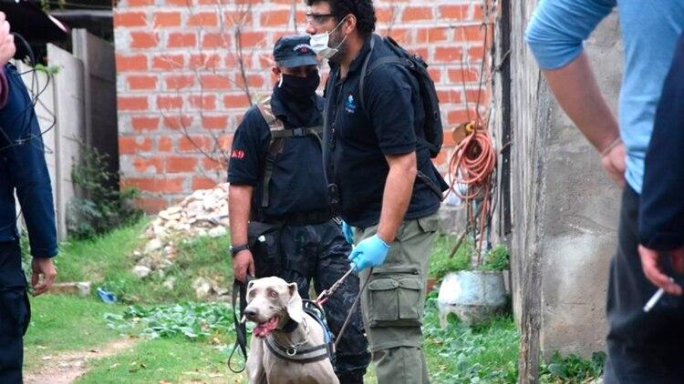 Perros: la búsqueda de Romero continúa.