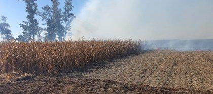 En lo que va del ano también crecieron los incendios intencionales en los campos
