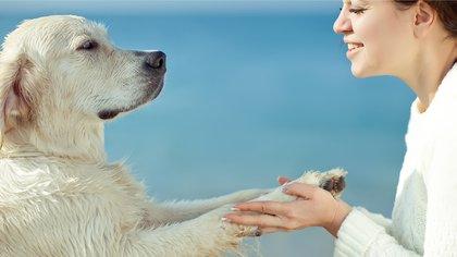 La mayoría de los perros son capaces de entender palabras y conceptos básicos (Shutterstock)