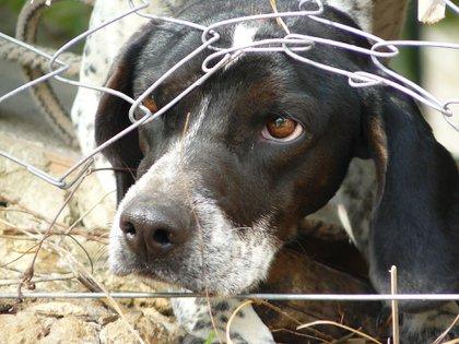 Los gobiernos locales tendrán un mayor respaldo jurídico para combatir el maltrato animal (Foto: Archivo)