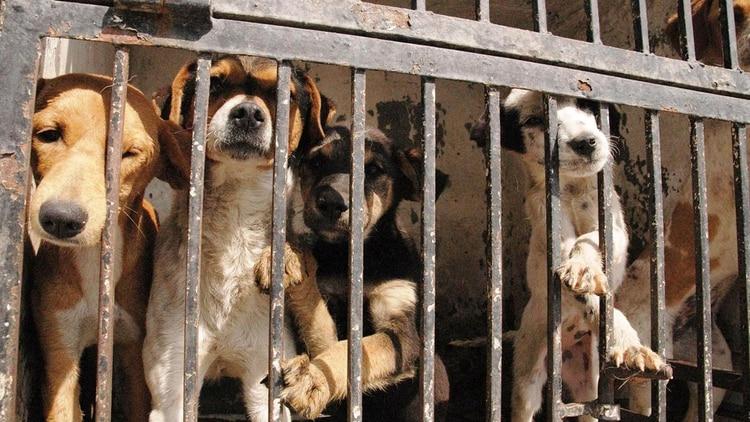 Otro punto importante pide el proyecto es la atención veterinaria para saber cuál es el estado del animal y para tener un seguimiento de su desarrollo (Red Animalista)