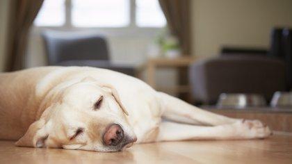 Los perros son en general un poco más viejos de lo que se pensaba (istock)