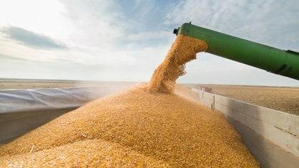 Al comenzar el mes de junio, ya se logró cosechar casi el 90% del área sembrada con la oleaginosa, son unas 33,5 millones de toneladas recolectadas.