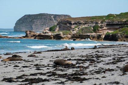 Seal Bay Kangoroo Island South Australia (Tourism Australia)