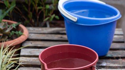 Descacharreo, repelente y limpieza: 10 consejos para combatir el dengue desde casa - Infobae