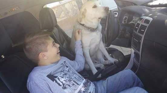 """Tango es uno de los 36 perros de asistencia que fueron entrenados por presos desde que nació """"Huellas de esperanza""""."""