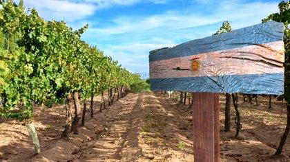 Argentina es uno de los mayores productores de vino del mundo (Shutterstock)