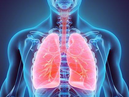 Los investigadores hallaron que los lóbulos inferiores de los pulmones son los que se dañan con mayor frecuencia (Shutterstock)