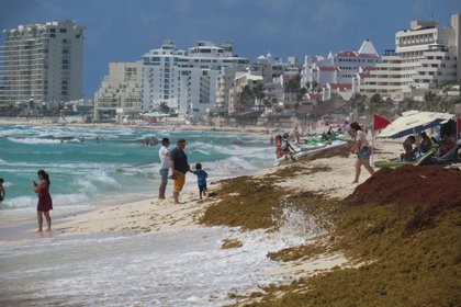 El sargazo en playas de Cancún el lunes 6 de mayo (Foto: Cuartoscuro)