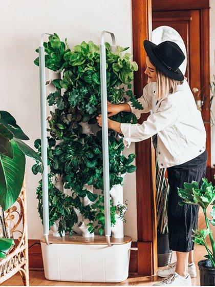 Gardyn permite cultivar en espacios pequeños