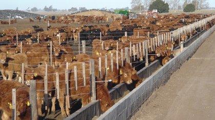 llevó a los productores a realizar recrías largas de la hacienda para consumo sobre pasturas o a campo natural, lo cual extendió el plazo de 'terminación' del animal. Nuevamente, ello se tradujo en una menor disponibilidad de hacienda para faena
