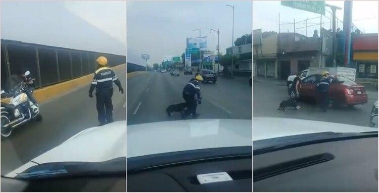 El policía de tránsito de la Ciudad de México se robó el corazón de los usuarios tras rescatar a un perro callejero (Foto: Twitter @BarmanSoyYo)