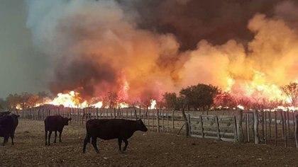 Las provincias más afectadas por los desbastadores incendios en 2020 fueron: Córdoba, Entre Ríos, Chaco, Salta , San Luis, Corrientes y Río Negro