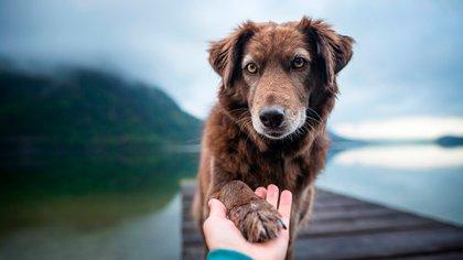 los perros tienen un sistema visual notablemente diferente al de los humanos (Shutterstock)