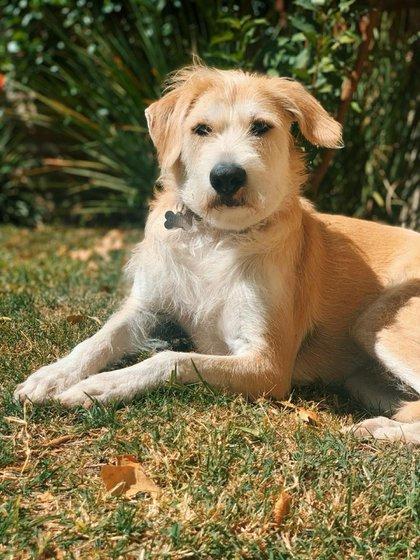 Los especialistas puntualizan que a los niños hay que explicarles que los perros y cualquier mascota que se adopte no son juguetes