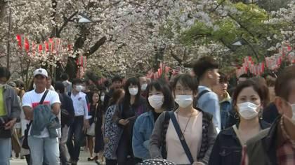 Los cerezos están en flor y pese a las advertencias debido al coronavirus, los japoneses acuden masivamente a admirar el deslumbrante espectáculo blanco y rosa. Algunos incluso se entregan al tradicional pícnic, firmemente desaconsejado este año por las autoridades.