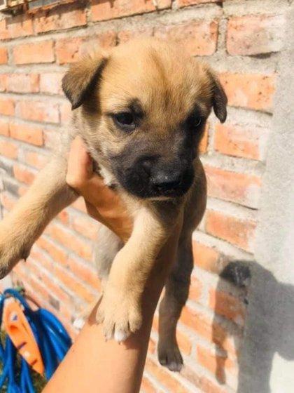 Uno de los perritos que Kevin Peralta recibió en adopción (Foto: Facebook The Pandu)