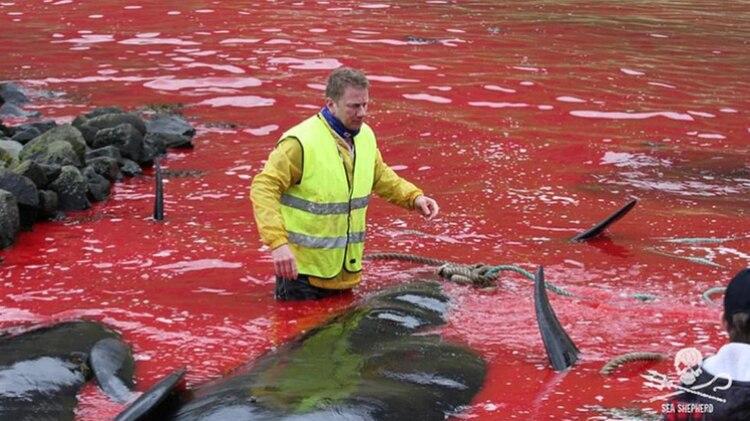 En las Islas Faroe y algunos países escandinavos las caza de ballenas es común (Foto: Archivo)