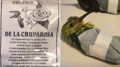 (Foto: Twitter Instituto Mexicano Fauna Flora y Sustentabilidad)