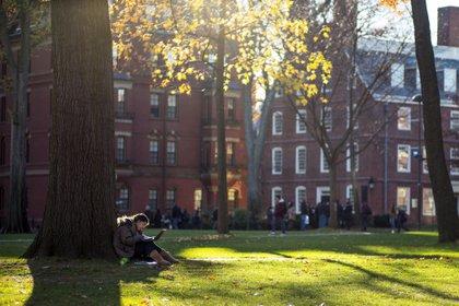 Una estudiante lee bajo un árbol en el campus de la universidad de Harvard en Cambridge (EFE/CJ GUNTHER/Archivo)