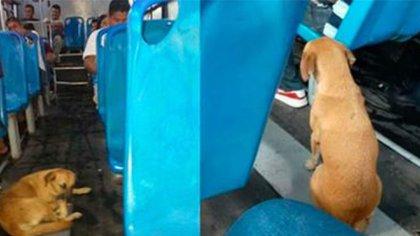 El perrito se acurruco dentro del autobús para lograr calentarse (Foto: Facebook)