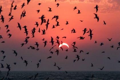 Los eclipses manejan animales callejeros, especialmente aves (foto YASSER AL-ZAYYAT / AFP)