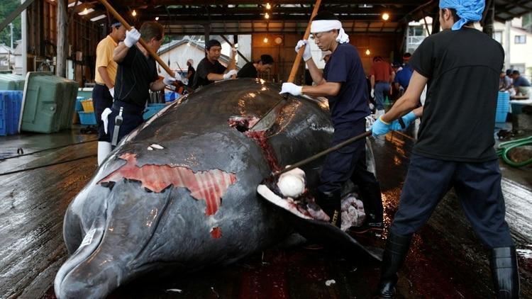 Vendedores de ballena en el sur este de Tokio. (Reuters)