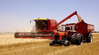 El impacto de la falta de lluvias en la actual campaña agrícola: habrá una menor siembra y producción